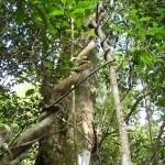 Bäume im Mingfeng-Tal