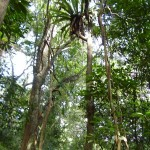 Pflanzen am Baum