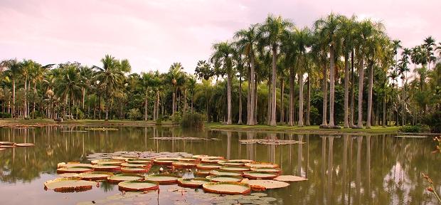 Der Tropische Botanische Garten in Xishuangbanna