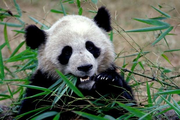 72 Stunden visafrei in Chengdu
