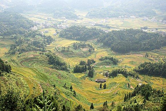 Reisterrassen von Ziquejie: Baguachong (八卦冲, Tal der Acht Trigramme)