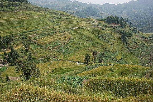 Reisterrassen von Ziquejie: Yueyashan  (月牙山, Crescent Hügel)