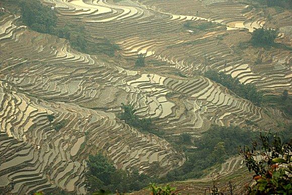 Die Reisterrassen von Yuanyang in Yunnan
