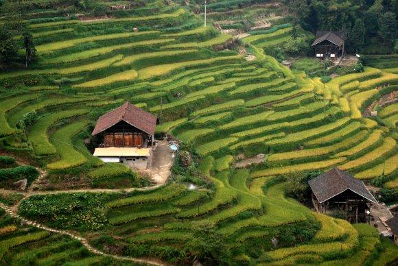 Die Reisterrassen von Ziquejie in Hunan