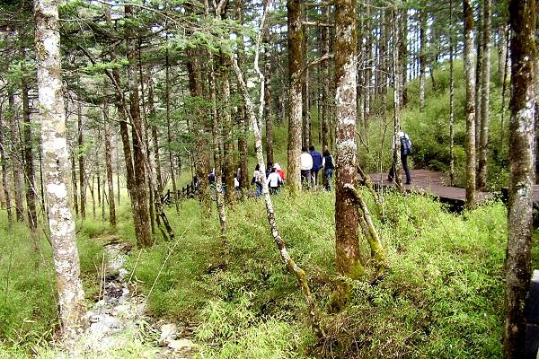 Shennongjia Waldgebiet