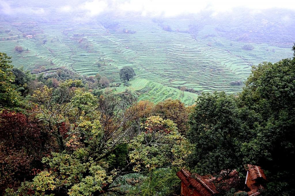 Rapsfelder beim Dorf Huangling in Wuyuan